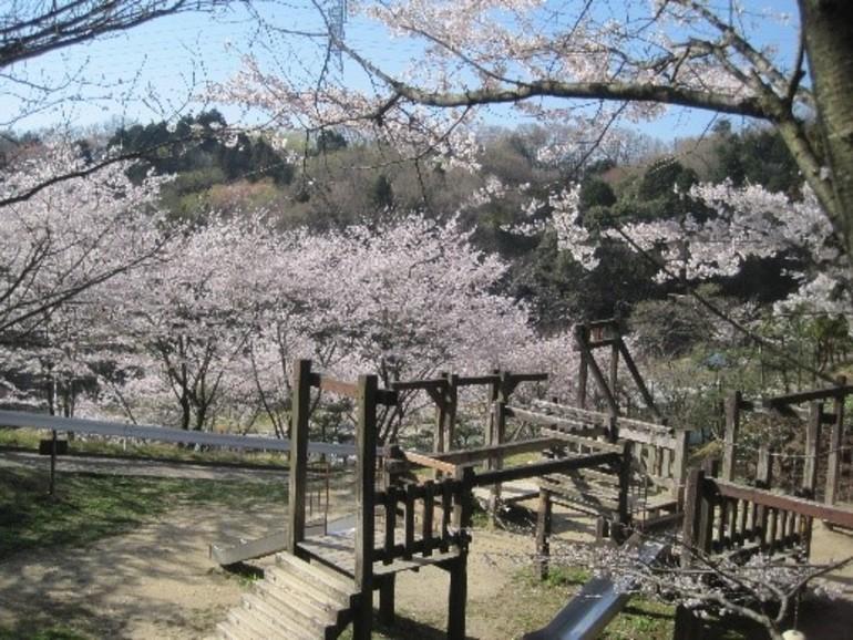 園内フィールドアスレチックと桜